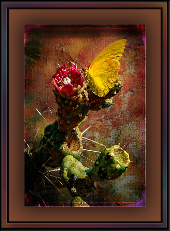Butterfly on Cactus (1 of 1) Grunge Art blog