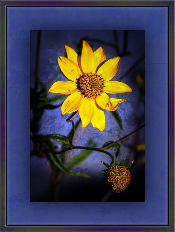 Goldeneye (1 of 1) grunge art 1 blog