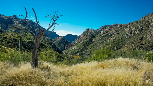 Looking Back Down Sabino Canyon