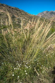 Along the Sabino Canyon Trail
