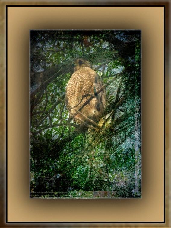 Milagrosa Loop Hike & Nature Walk-0757 grunge art blog