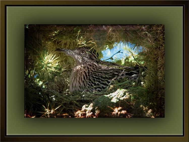 Nesting Cactus Wren (1 of 1)-2 art blog