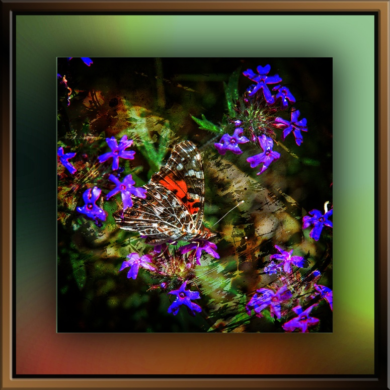 Painted Lady Butterfly (1 of 1)grunge art blog