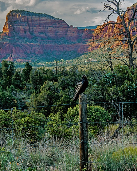 Raven On Fence Post (1 of 1) blog