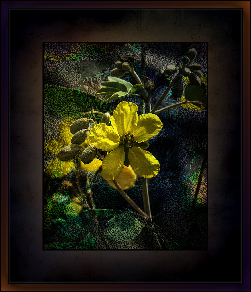 Sabino Canyon September 4, 2015-8859 wildflower grunge art blog