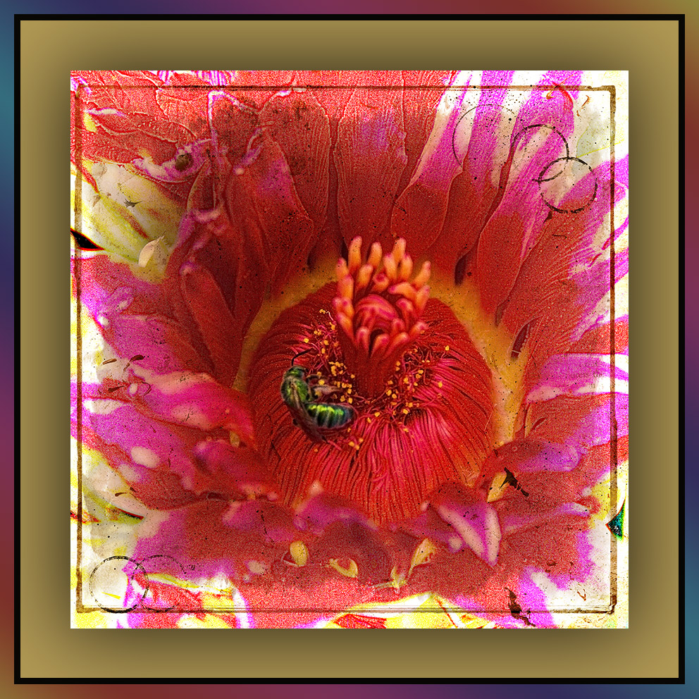 Sabino Canyon September 4, 2015-8894 art I blog