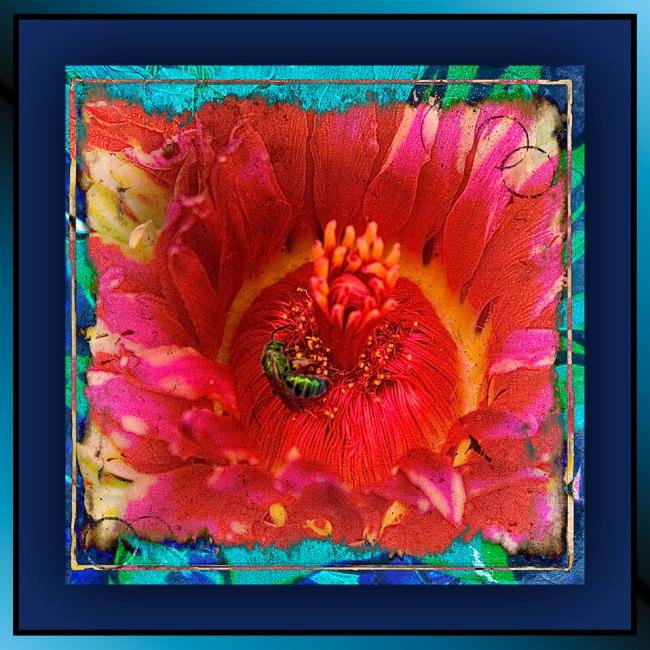 Sabino Canyon September 4, 2015-8894 art II blog