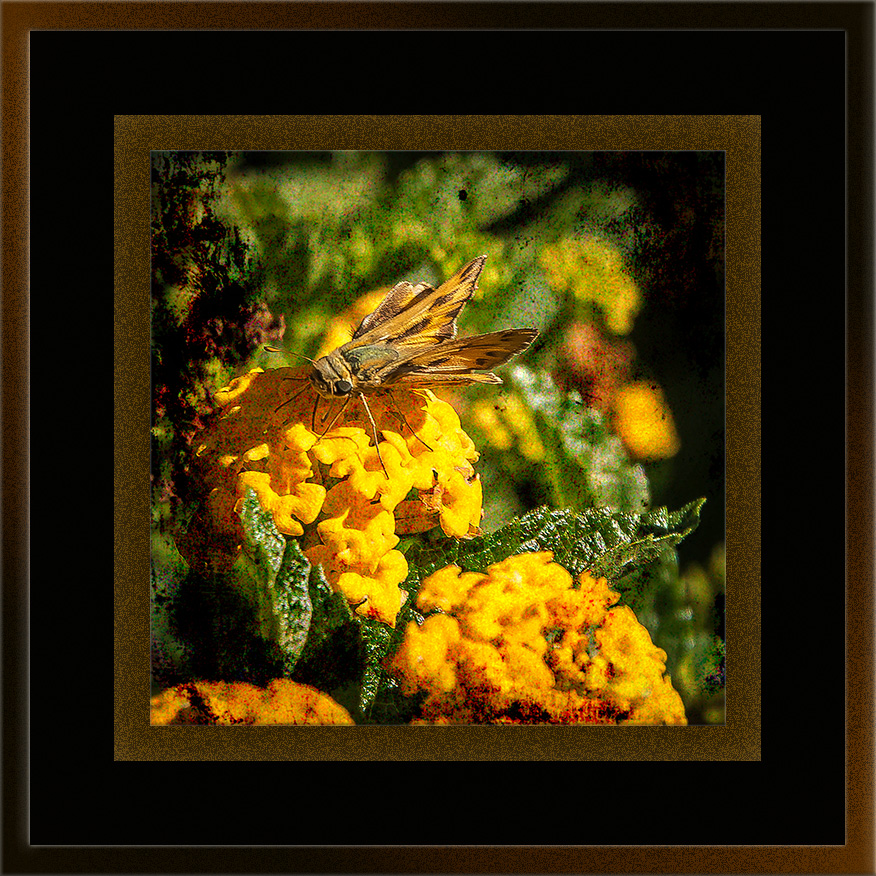 Skipper Butterfly (1 of 1)-2 grunge art blog