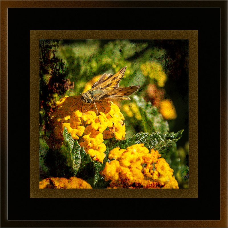 Skipper Butterfly (1 of 1)-2 grunge art blog