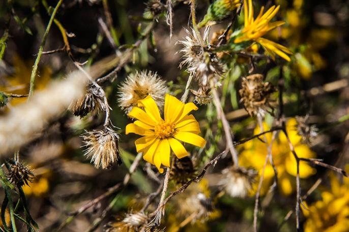 Wildflower (1 of 1)-2 blog