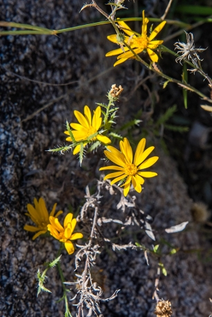 Wildflower (1 of 1)-3 blog