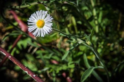 Wildflower (1 of 1)-4 blog