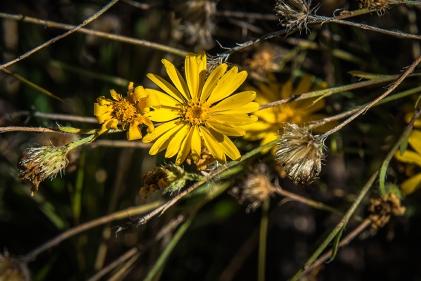 Wildflower (1 of 1)-5 blog