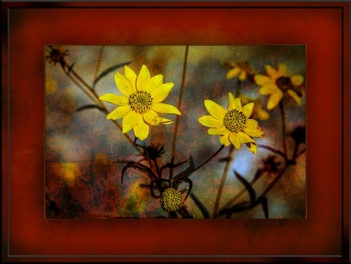 Wildflowers Goldeneye(1 of 1)Grunge Art blog 2
