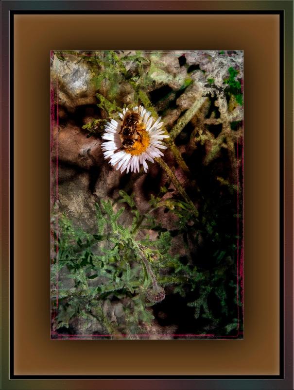 Bee on Flawer Grunge Art blog