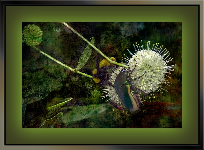 Insects on Buttonbush (1 of 1)Grunge Art blog