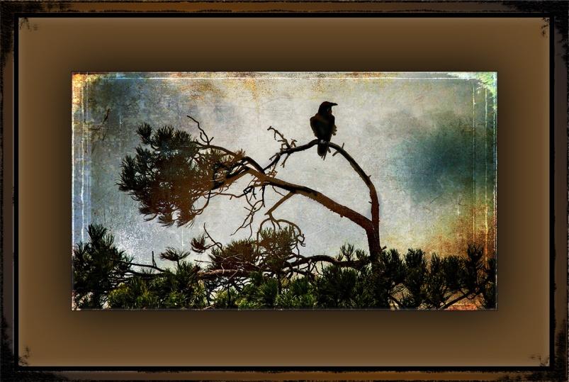 Raven (1 of 1) grunge Art blog