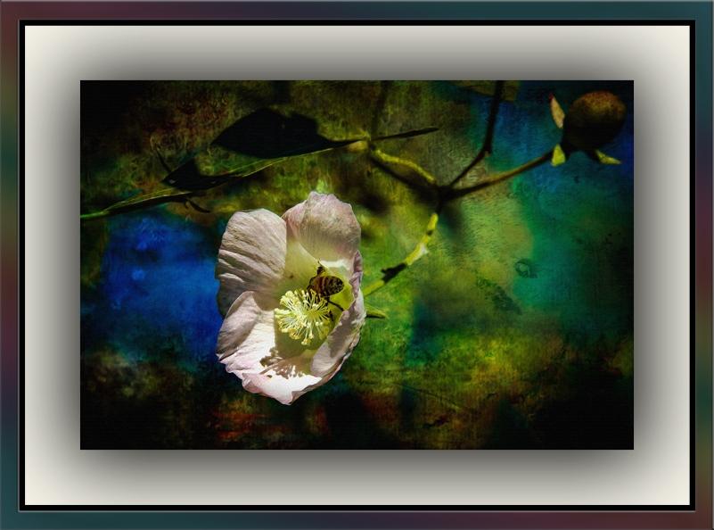 Wild Cotton (1 of 1)-3 Grunge Art blog