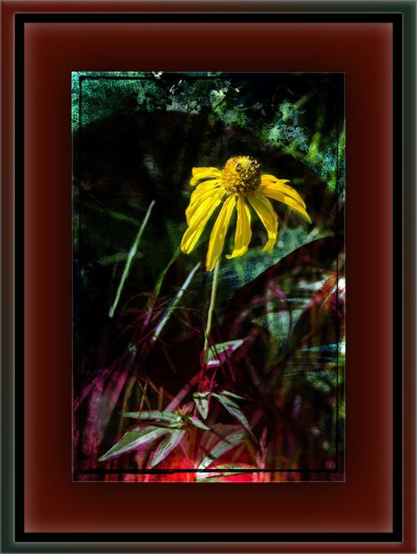 Wildflower (1 of 1) Grunge Artblog