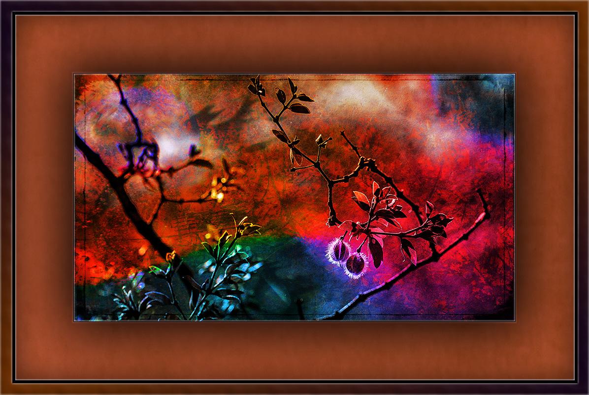 creosote Seed Pod (1 of 1) grange art blog