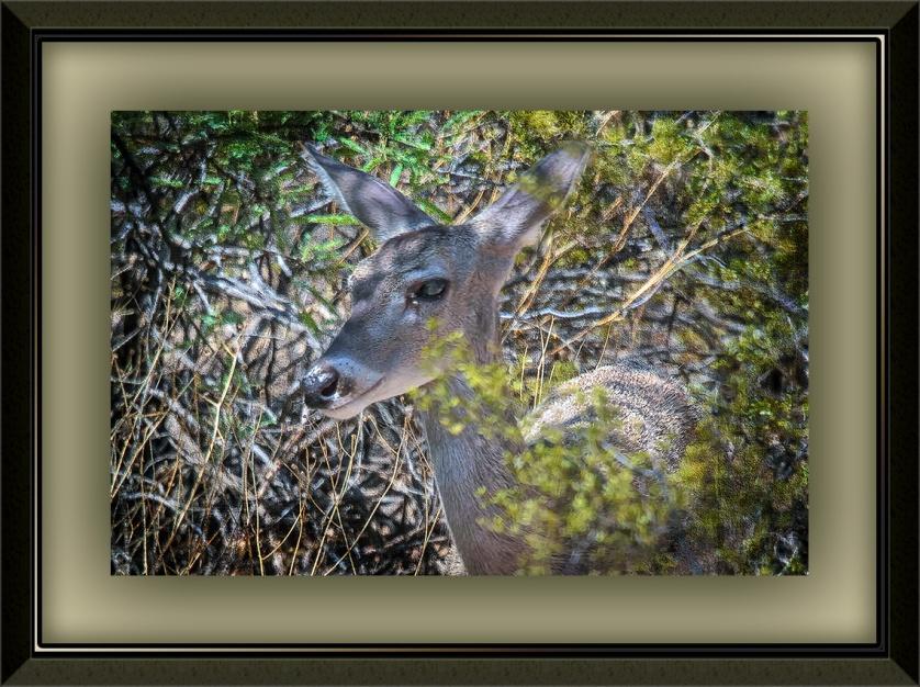 Deer in the Bush (1 of 1) art blog