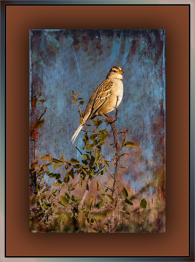 Rufous-crowned Sparrow (1 of 1)-2 grunge art blog