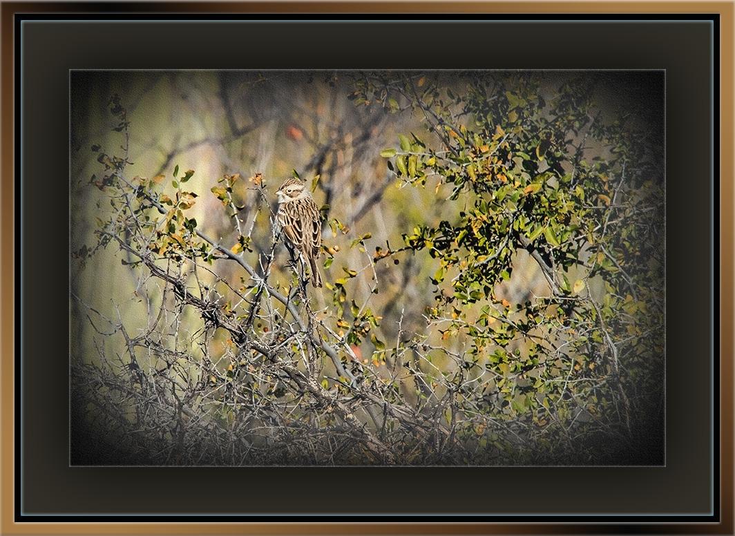 Sparrow (1 of 1) art blog