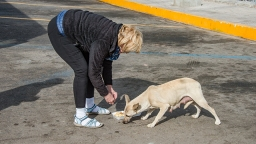 Tosh Feeding Dog at Hermosillo Rest Break
