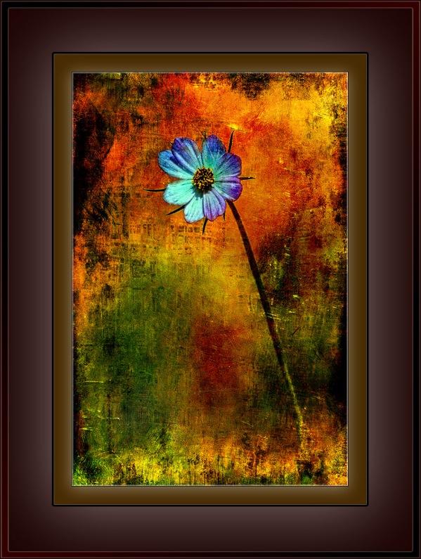 Wildflower Grunge Art_HDR2 blog