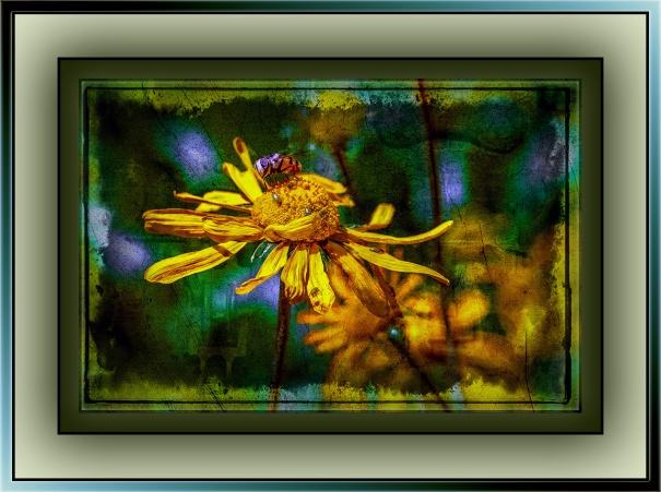 Wildflowers (1 of 1)-2 grunge art blog