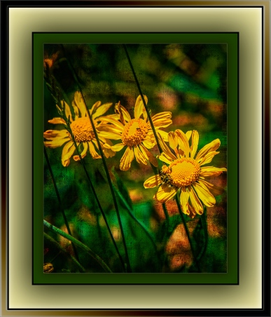 Wildflowers (1 of 1) grunge art blog