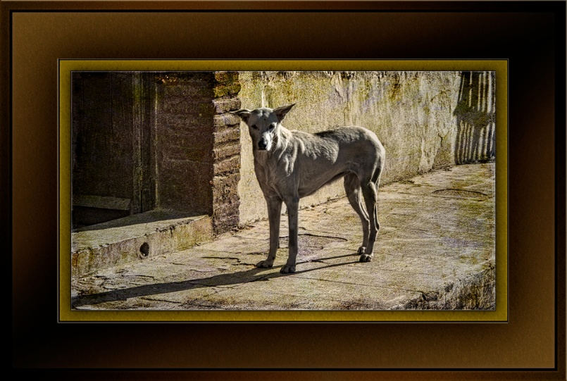 Alamos Dog (1 of 1)_art blog