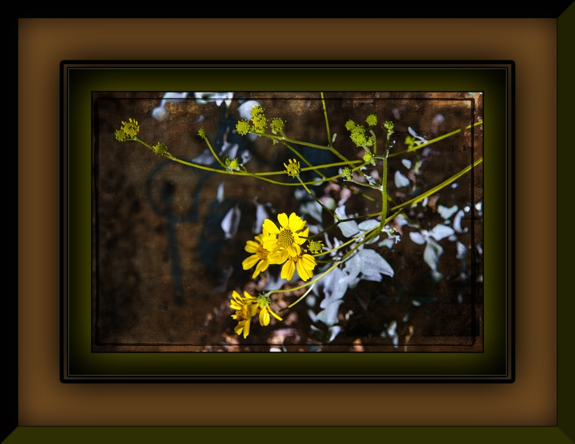 Brittle Bush (1 of 1) Grunge Art blog
