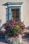 Flowers (1 of 1)-3blog