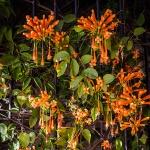 Flowers (1 of 1)-5blog