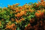 Flowers (1 of 1)-7blog