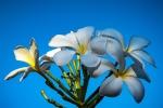 Flowers (1 of 1)-8blog
