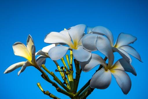 Flowers (1 of 1)-8 blog