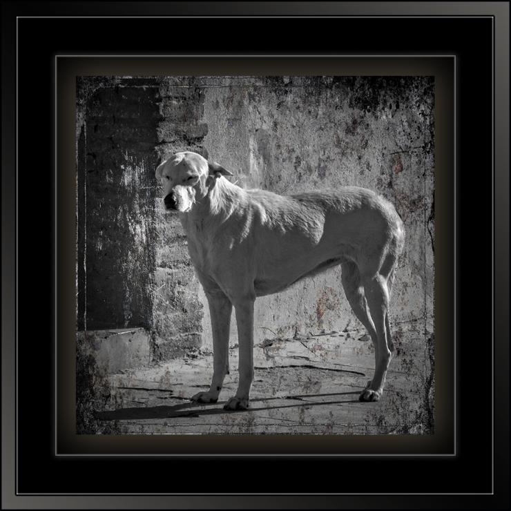 Street Dog (1 of 1)-2 B&W Grunge blog