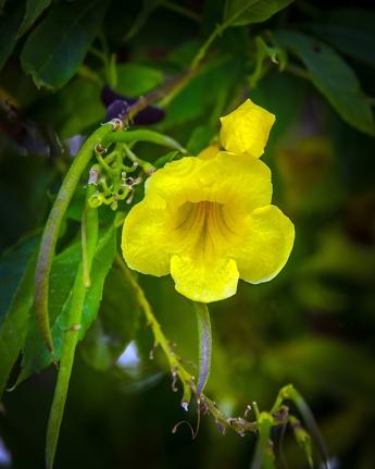 Yellow Flower (1 of 1) blog