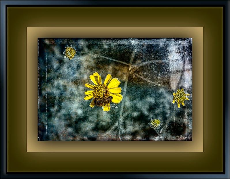 Bee on Brittlebush-9780 grunge Art blog