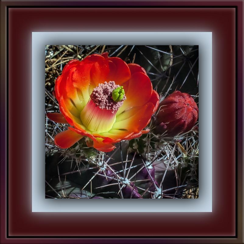 Cactus Flower (1 of 1)-2 blog