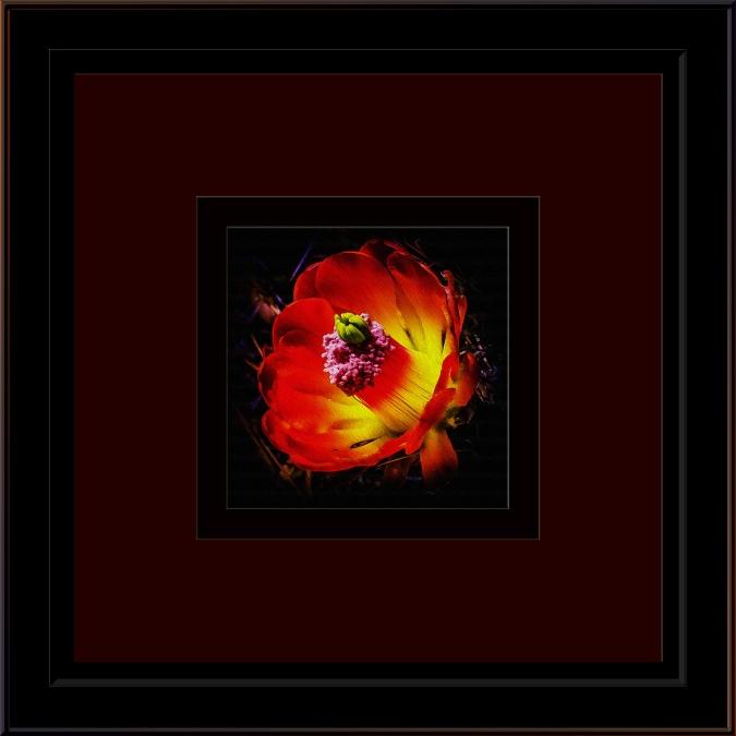 Cactus Flower (1 of 1)-5_art blog