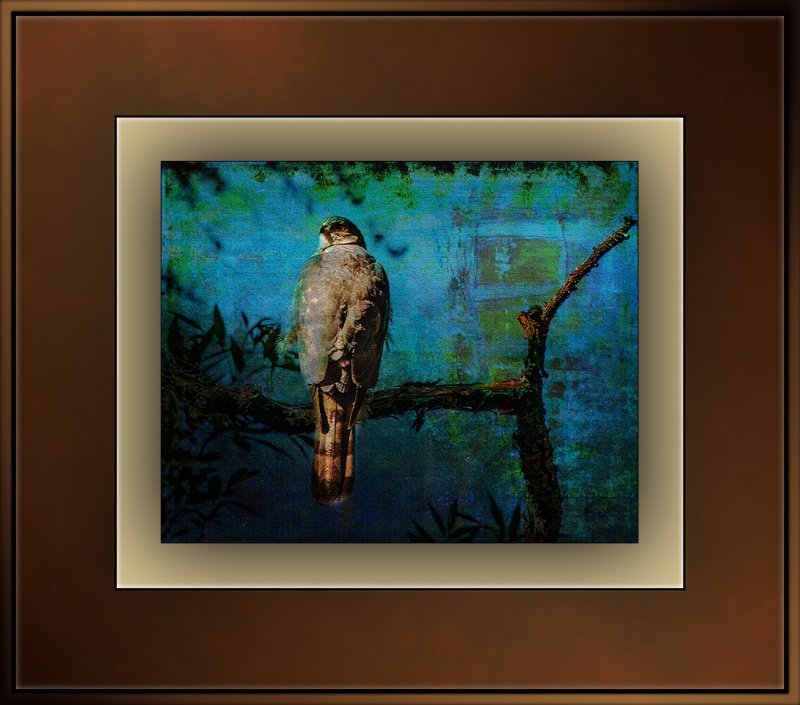 Copper's Hawk (1 of 1) art blog