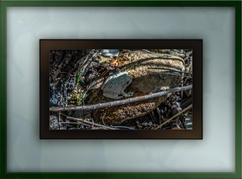 Creek Frog (1 of 1) blog