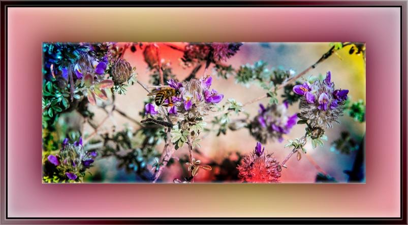 Desert Museum-9781 bee art blog