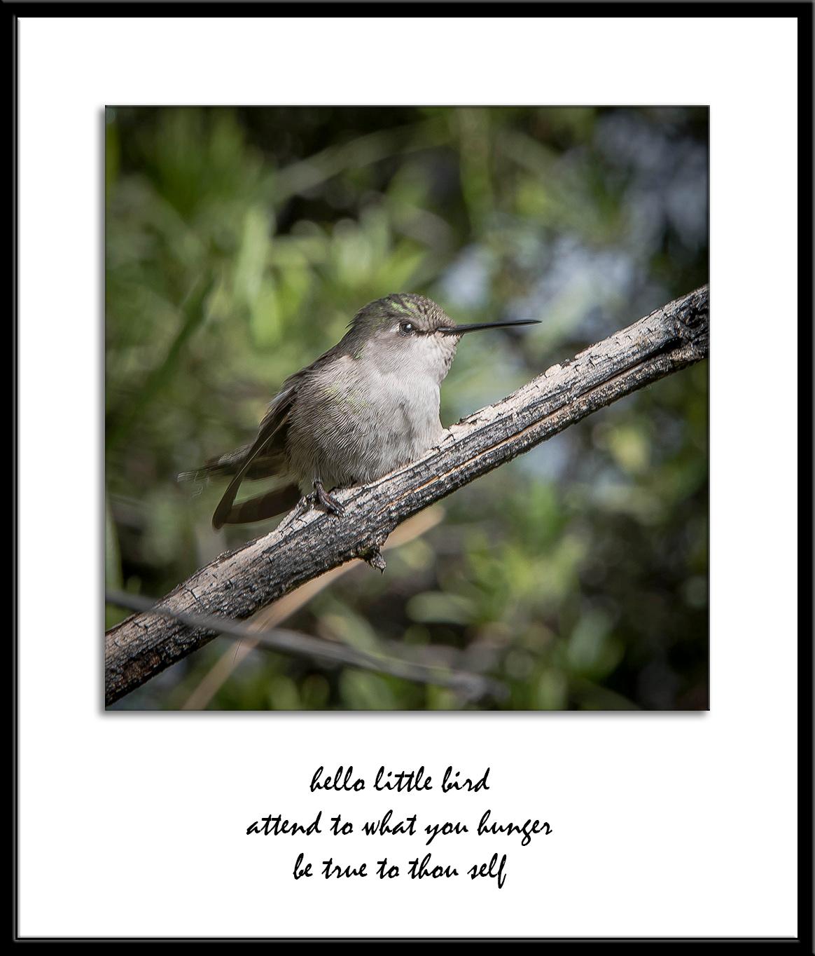 Desert Museum-9810 hello little bird