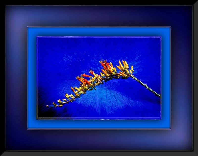 ocotillo cactus (1 of 1)-2 art blog