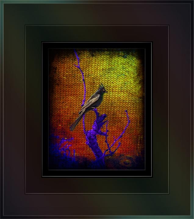 phainopepla (1 of 1) art blog