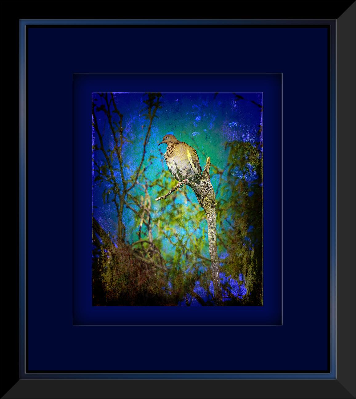 Whitewinged Dove (1 of 1)-3 grunge Art blog